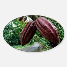 Cocoa pods - Decal