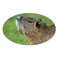 Coypu - Decal