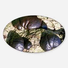 Cramp balls fungi - Decal
