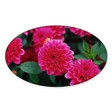 Dahlia flowers - Decal