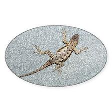 Eastern fence lizard - Decal