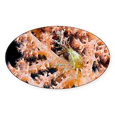 Decorator crab - Decal