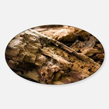 Dry rot fungus - Decal