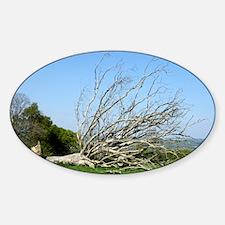 Fallen dead tree - Sticker (Oval)