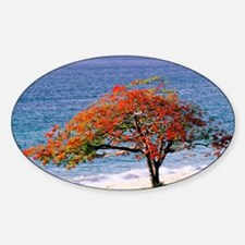 Flamboyant tree - Decal