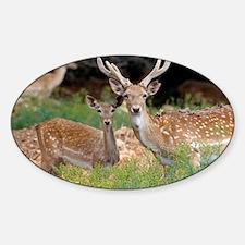 Fallow deer - Sticker (Oval)