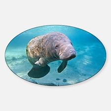 Florida manatee swimming - Sticker (Oval)