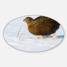 Female red grouse in snow - Sticker (Oval)