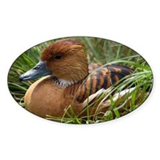 Fulvous whistling duck - Decal