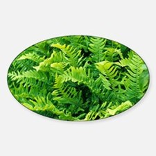 Fern leaves - Sticker (Oval)