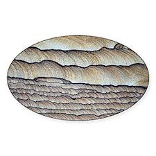 Fossilised sand - Decal