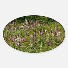 Foxgloves (Digitalis purpurea) - Decal