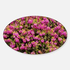 Heather 'King George' flowers - Decal