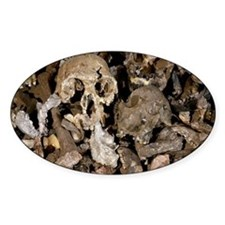 Hominid skull casts - Decal