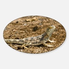 Ground agama - Sticker (Oval)