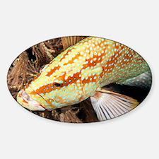 Grouper - Sticker (Oval)