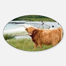 Highland cattle by the sea - Sticker (Oval)