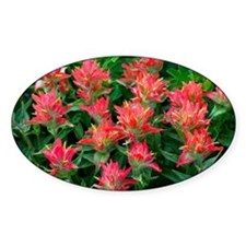 Indian paintbrush flowers - Decal