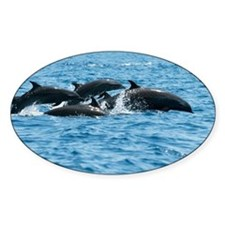 Indo pacific bottlenose dolphins - Decal