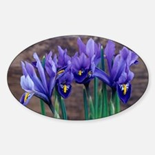 Iris 'Joyce' flowers - Sticker (Oval)