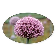 Leek flower-head - Decal
