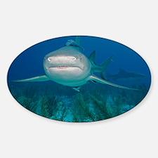 Lemon shark - Decal