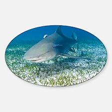 Lemon shark and remoras - Sticker (Oval)