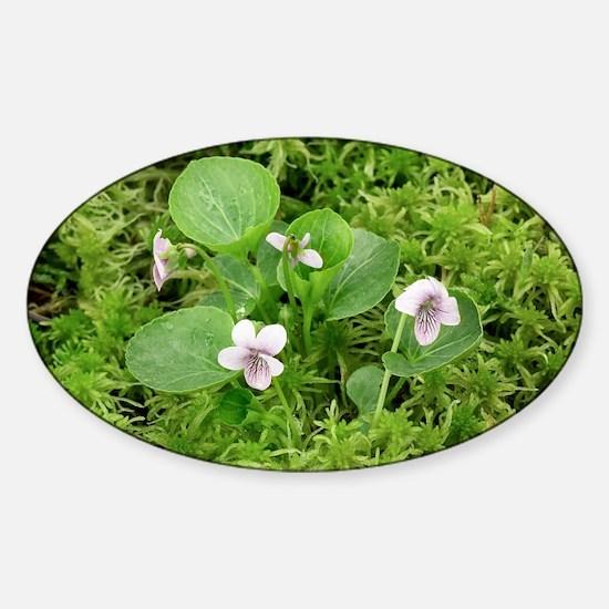 Marsh violet (Viola palustris) - Sticker (Oval)