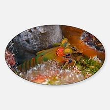 Mantis shrimp - Sticker (Oval)