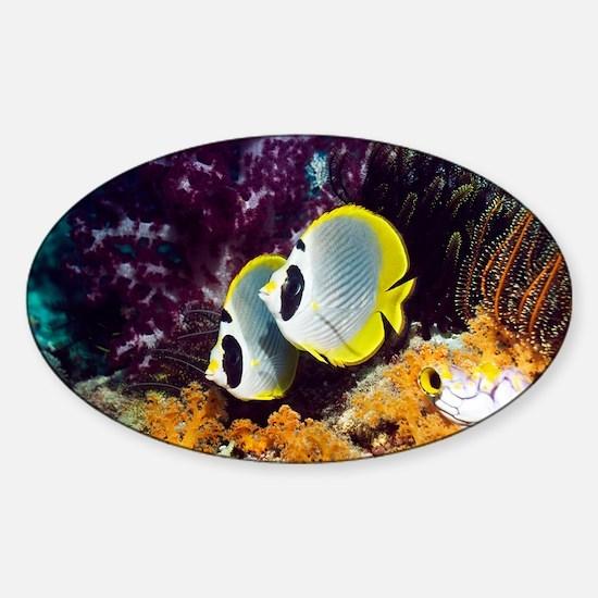 Panda butterflyfish - Sticker (Oval)