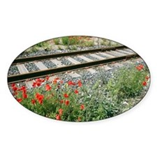Poppies beside a rail track - Decal