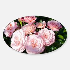 Rose (Rosa Sexy Rexy Macrexy) - Sticker (Oval)