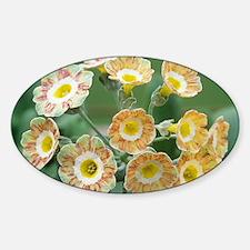 flowers - Sticker (Oval)