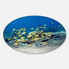 Snappers over coral - Sticker (Oval)