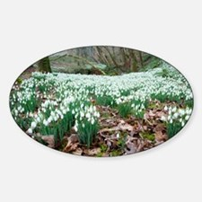 Snowdrops (Galanthus nivalis) - Sticker (Oval)