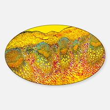 Sunflower stem, light micrograph - Sticker (Oval)