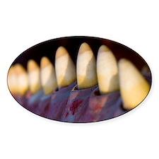 Sperm whale teeth - Decal