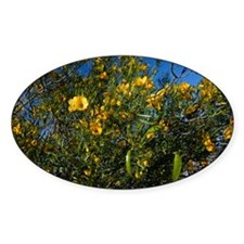 Sticky Cassia (Senna glutinosa) - Decal