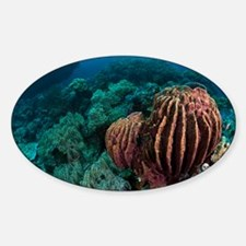 Sponges on coral reef - Sticker (Oval)