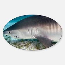 Tiger shark - Sticker (Oval)
