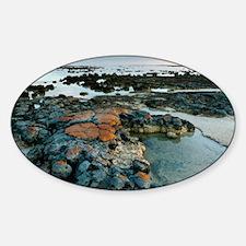 Stromatolites in Australia - Decal