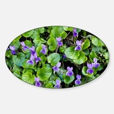 Viola odorata (Sweet Violets) - Decal