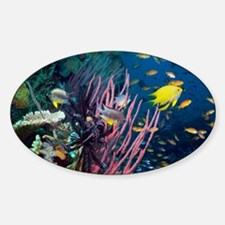 Tropical reef - Decal