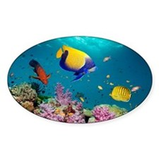 Tropical reef fish - Decal