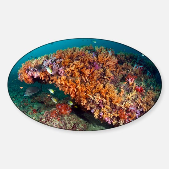 Tropical reef, Indonesia - Sticker (Oval)