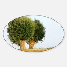 Willows (Salix) - Sticker (Oval)