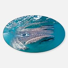 Whale shark - Sticker (Oval)