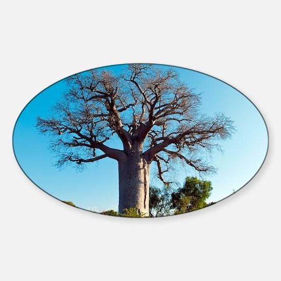 tree - Sticker (Oval)