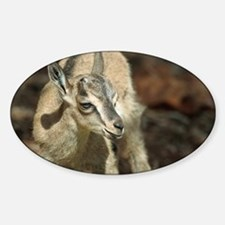 Young wild goat - Sticker (Oval)