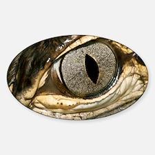 American alligator eye - Decal